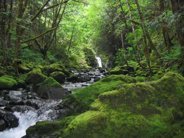 Z Vancouver >> Fossli Falls, Sproat Lake | Flickr - Photo Sharing!