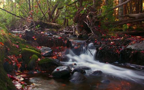 longexposure autumn red fall water leaves moss pond stream pentax sandy kx