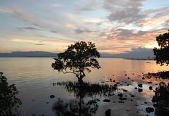 Puerto Princesa mangroves