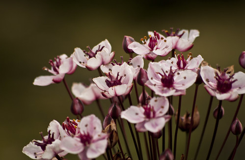 Tiny Pinks - Copyright R.Weal 2011