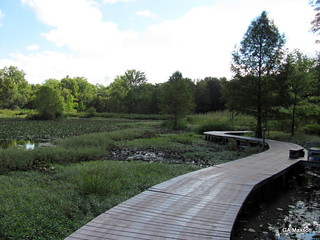 boardwalk and pond