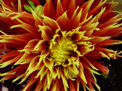 """Sep 23 2011 [Day 326] """"First Day Of Fall"""""""