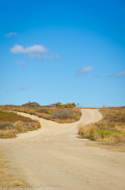 Day 156/September 19 - Two roads diverged in a wood...