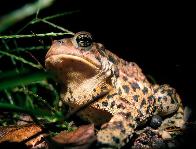 The most spectacular toad of the year.