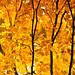 Autumn on Skillet Creek by Art Walaszek