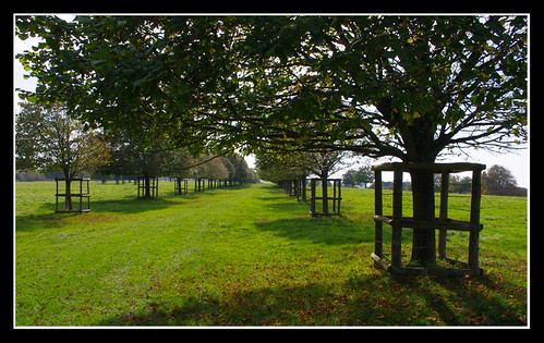 autumn trees leaves line avenue mygearandme ringexcellence blinkagain musictomyeyeslevel1