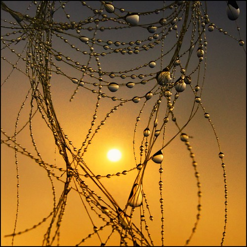 sunrise reflections waterdroplets equine horsehair