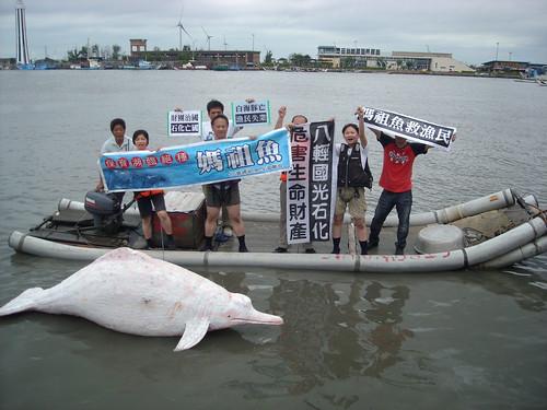 白海豚和漁民在同一條線上。(台灣生態學會提供)