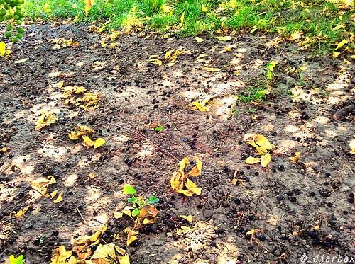 dirt fallenleaves cherrys sunshinespots
