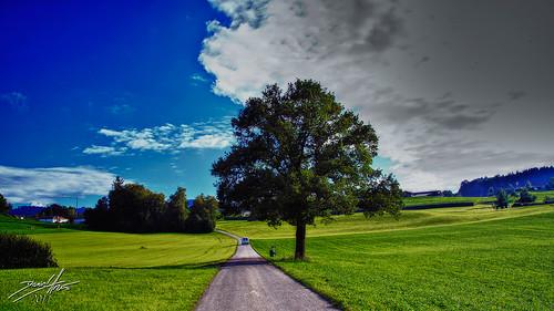 auto road tree car landscape drive schweiz switzerland niceshot path route che sg landschaft put weg pfad sanktgallen 2011 mörschwil dalmatino landschaftsbild staza pejzaž tripleniceshot