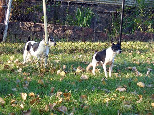 2011-09-14 - Dogs outside - 0004