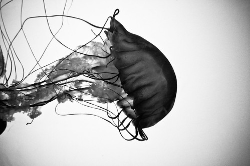 The internet is like a giant jellyfish you cant step on it you cant go around it youve got to get through it by instant vantage on flickr