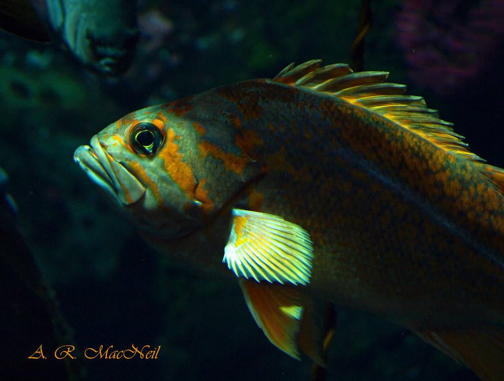 Fish in the Shadows - Vancouver, British Columbia