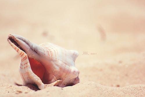 sea beach tanzania sand mare indianocean shell zanzibar spiaggia sabbia conchiglia oceanoindiano