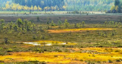 finland nikon swamp jyrki kotka salmi valkmusa d7000