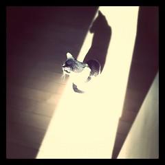 hand(0.0), aerialist(0.0), darkness(0.0), shadow(1.0),