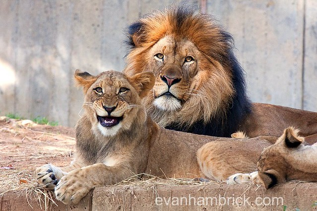 animals funny cubs smiling - photo #14