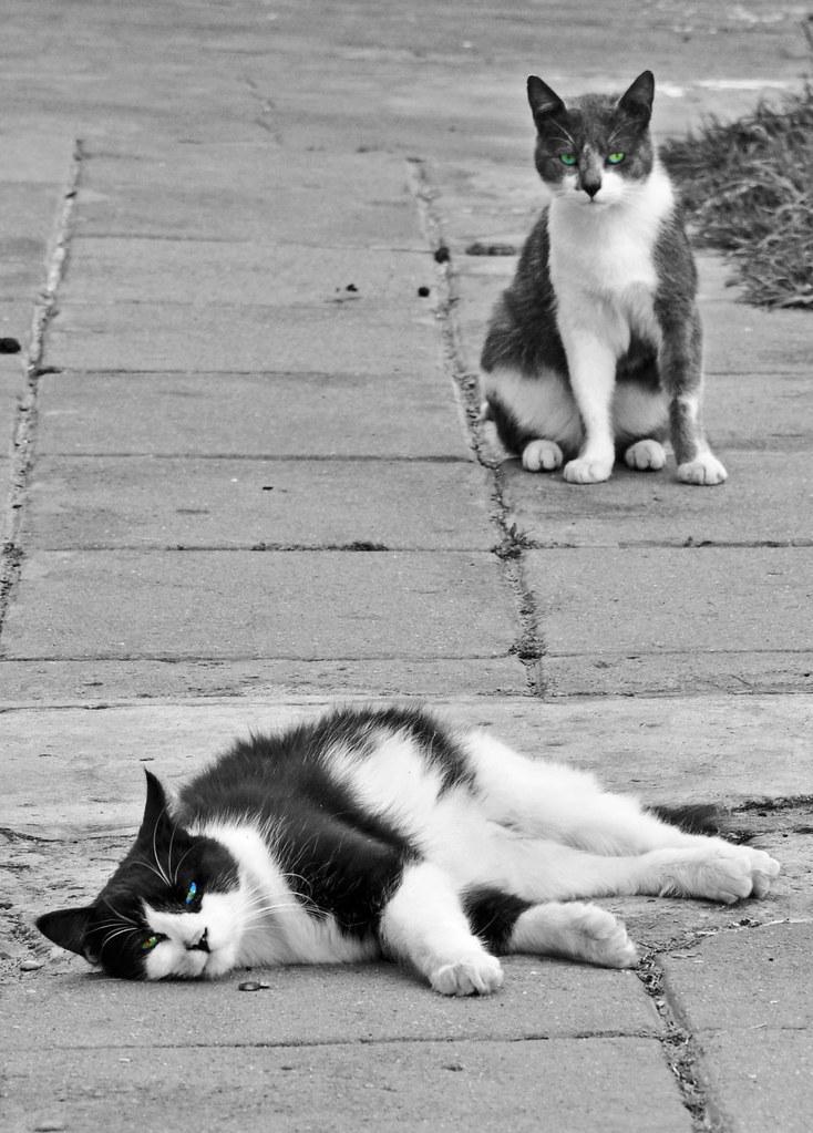 [Actividad] Aquéllos gatos