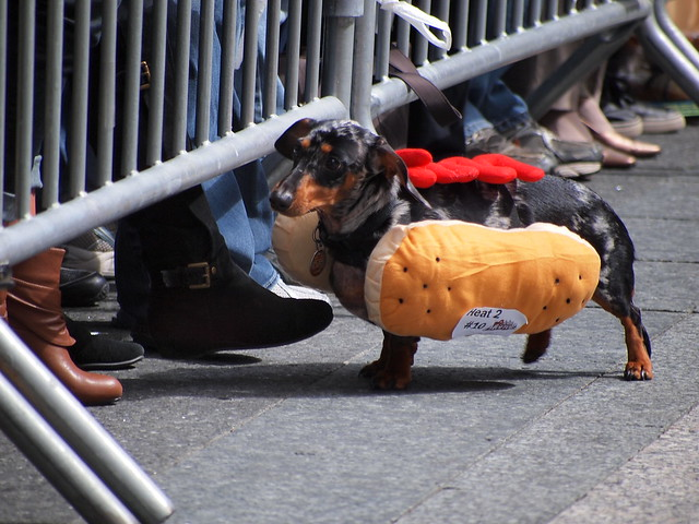 Running Of The Wieners (6)
