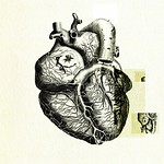 Heart anatomy 02