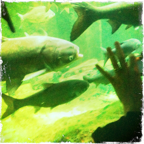 Carp are coming by jmogs via Flickr