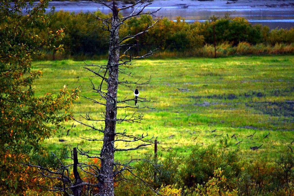 Alaska Conservation Center