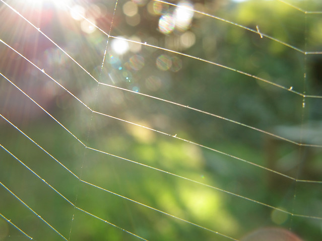 Backlighted Web