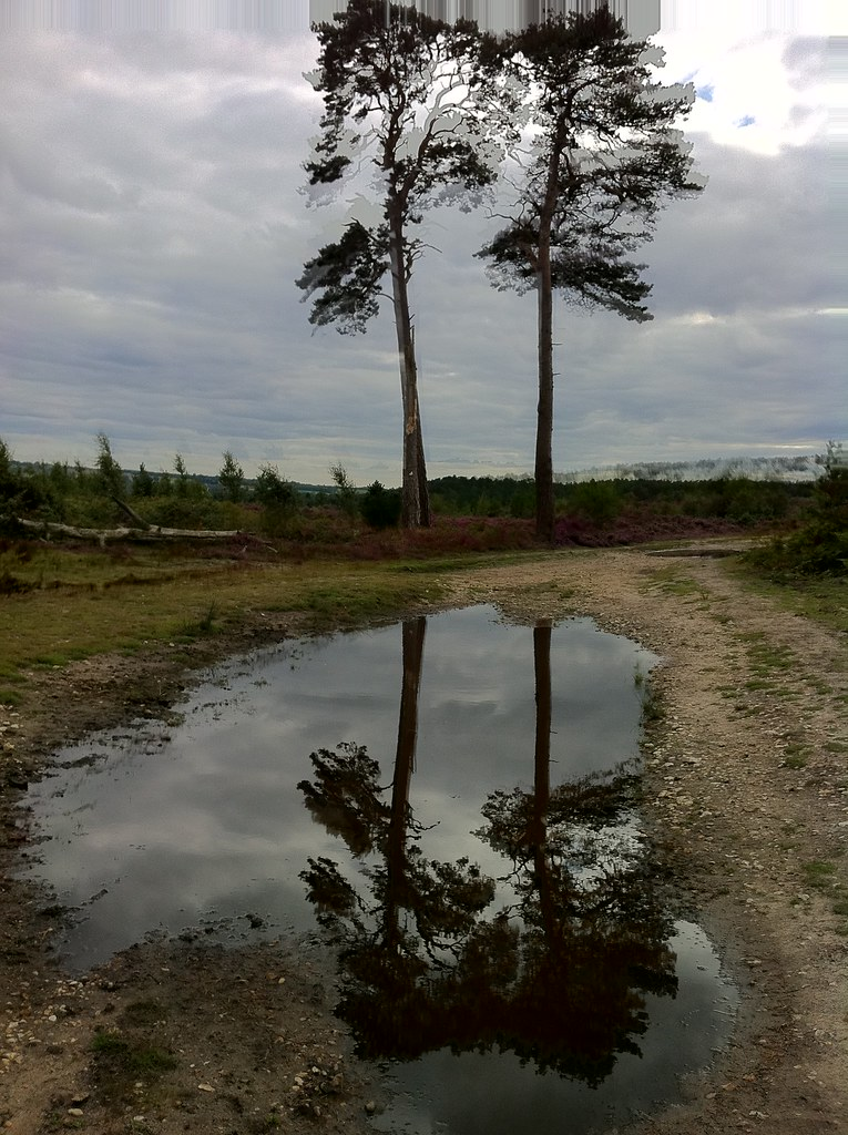 Cedar Reflections