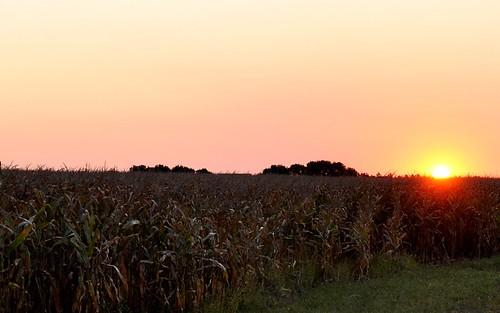 red sun color field liberty dawn corn north harvest iowa rise