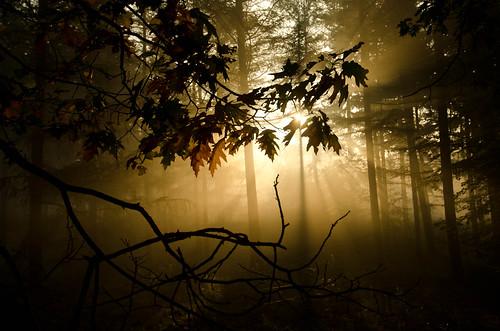無料写真素材, 自然風景, 森林, 薄明光線