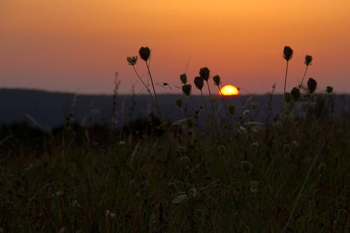 sunset wallpaper sun wall forest canon dawn background country bulgaria fields bg countrylife sumen shumen 550d preslav velikipreslav eos550d smyadovo salvabarbera smiadovo