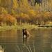 Small photo of Bear - - Alaska Wildlife Conservation Center