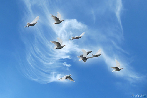 International Day of Peace by Flickr User: Alice Popkorn