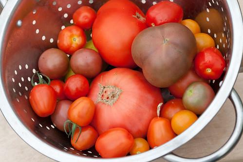 Tomatoes 2011