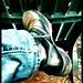 Shakespeare Santa Cruz : Dusty Boots in The Glen by Christopher Gurr