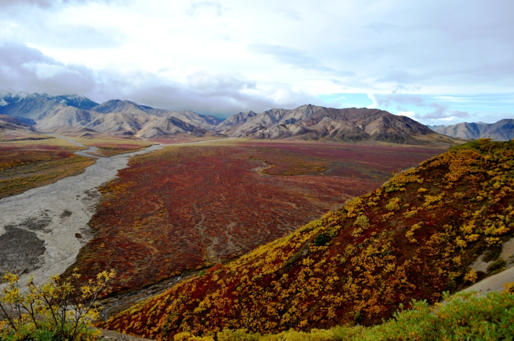 Denali National Park, Aug. 31, 2011