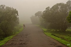 fog, soil, tree, dirt road, road, nature, haze, green, morning, landscape, rural area, mist, infrastructure,