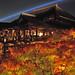 2010 京都 秋:葉櫻 清水寺
