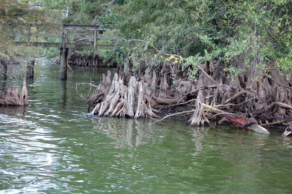 Blue Bank Reelfoot Lake Cabins – Home Exsplore