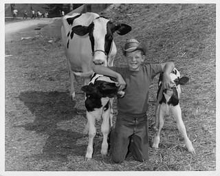 Twin Holstein Heifers (MSA)