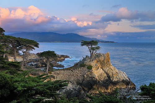 Only The Lonely - Monterey Cypress (Explore)