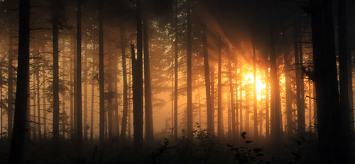trees sun mist silhouette fog forest sunrise canon landscape day atmosphere sunrays washingtonstate t1i 1riverat matthewreichel