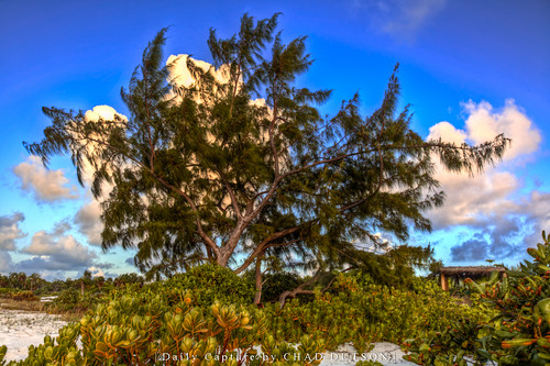 tree beach nature pine landscape photography photo outdoor shore hdr provo turksandcaicos longbay providenciales