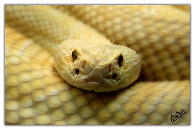 Serpiente (Zoo de madrid)