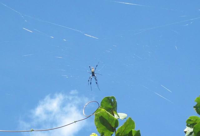 Not so Isty Bitsy Spider