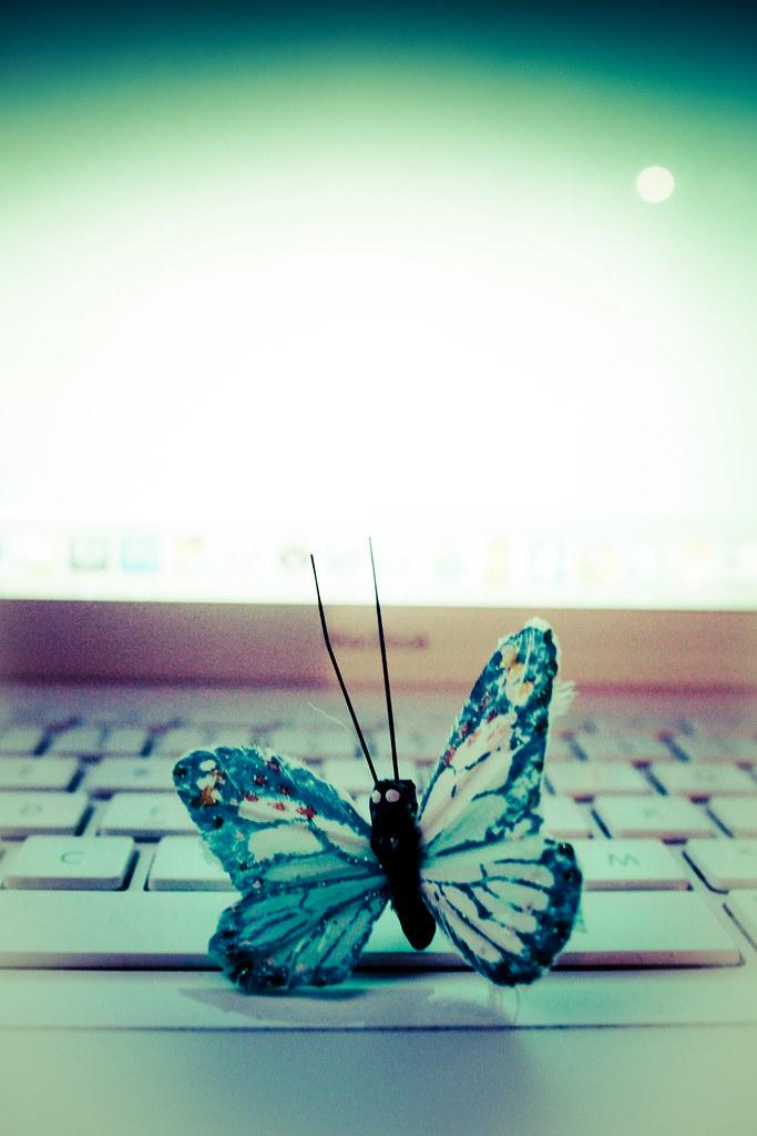 6/365 *Blue Mac Butterfly