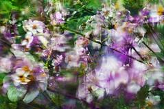 Flowers Through A Rain Soaked Window