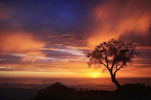 lake sunrise landscape banksia cathie