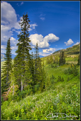 nature forest landscape utah outdoor national timpanogos wilderness americanforkcanyon timpooneke