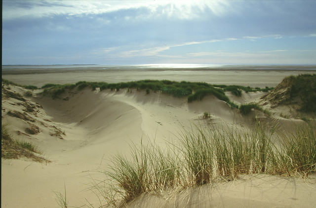 Duddon Estuary - Marram grass and sand dunes